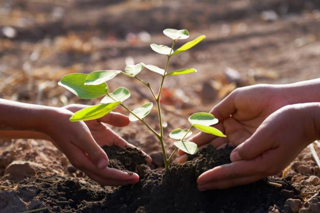 SAP aumenta su compromiso con la sostenibilidad plantando un árbol para cada compra en línea en la tienda SAP y el centro de aplicaciones de SAP